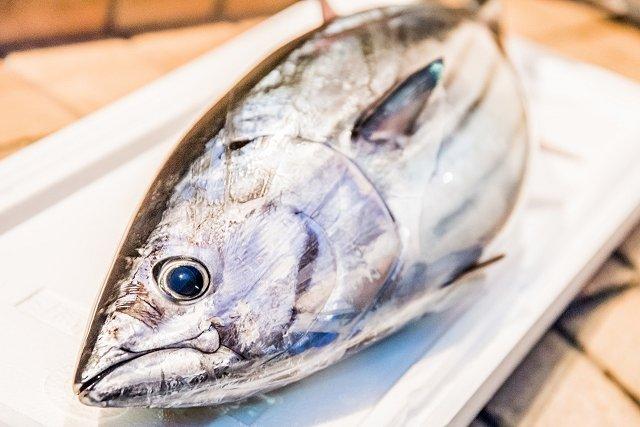 高知かつお漁協など、一本釣り漁で海のエコラベル取得目指す