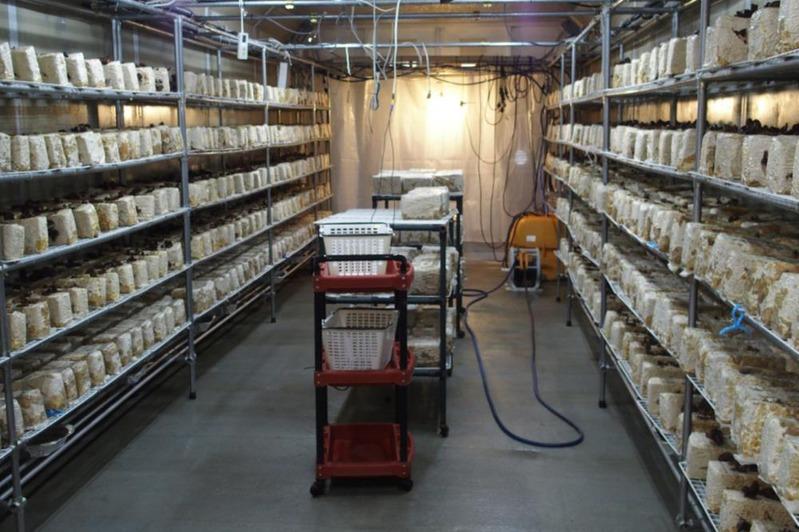 キクラゲ効率栽培、熱源がシステム販売 管路設備活用
