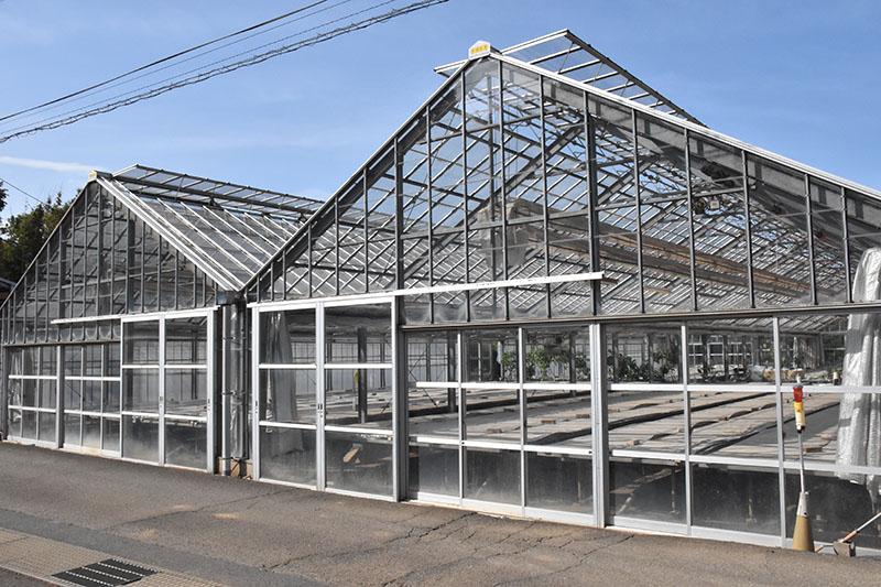 グリーンコンチネンタル、観葉植物をメンテ 千葉に養生農園