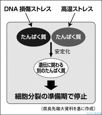 技遺伝 同性