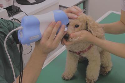 メニコン、犬の眼科診察サポート AIが可能性のある異常所見提示